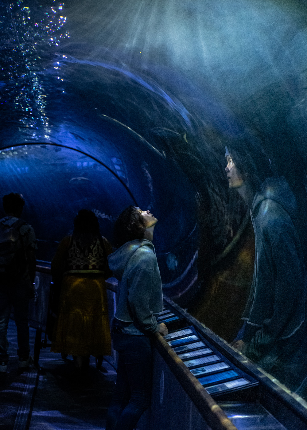 A young person looks up at a fish in the tunnels of the Aquarium of the Bay at Fisherman's Wharf in San Francisco, CA