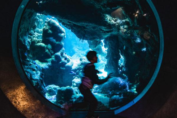 A boy runs through the aquarium at the California Academy of Sciences in San Francisco, CA