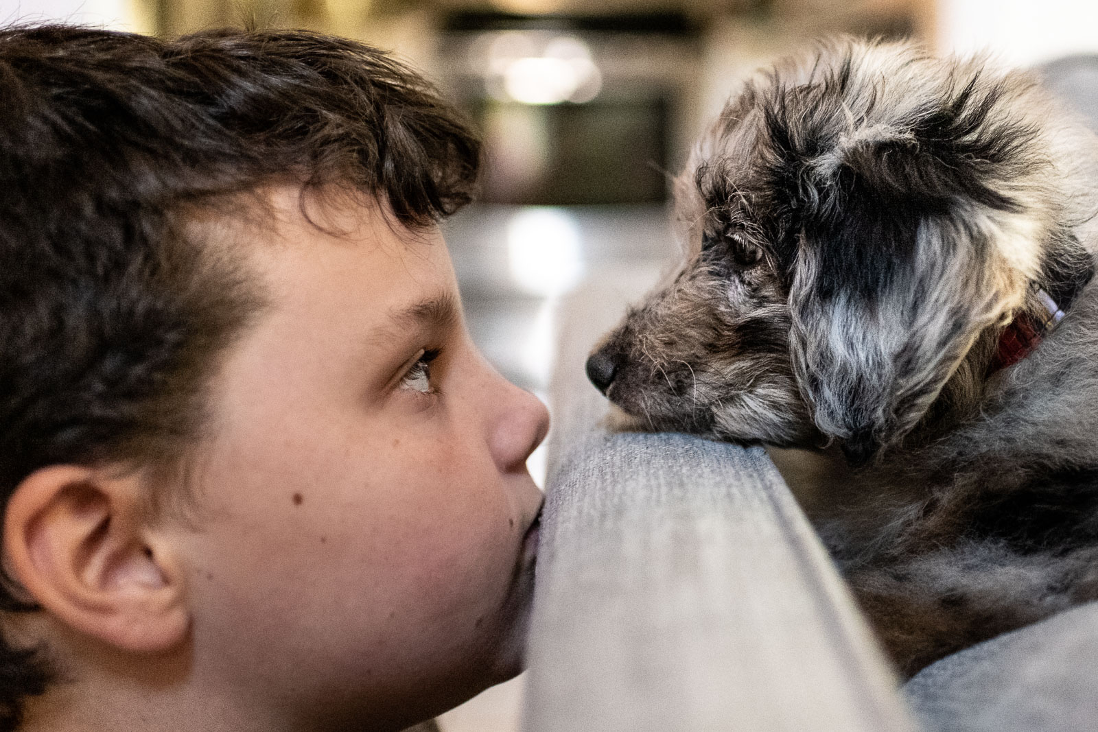 Boy stares at puppy who stares back at him in Sausalito, CA