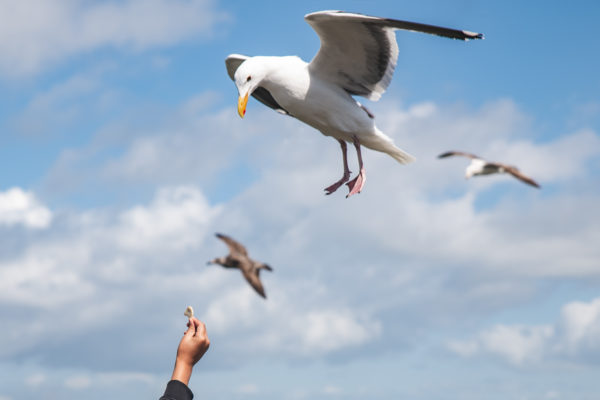Young boy holds up his hand to feed a seagull in San Francisco, CA