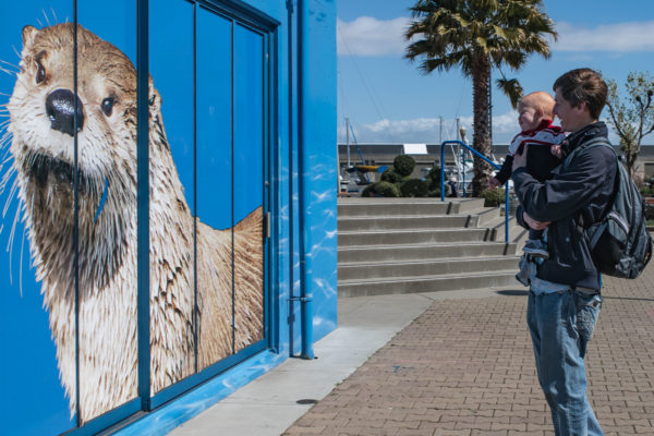 A man and his son look on at the otter at the Aquarium of the Bay in San Francisco, CA