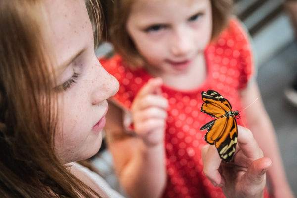 A child holds a butterfly at the Academy of Sciences in San Francisco, CA