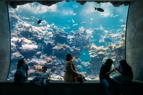 A family enjoys the aquarium at the academy of sciences in San Francisco, CA